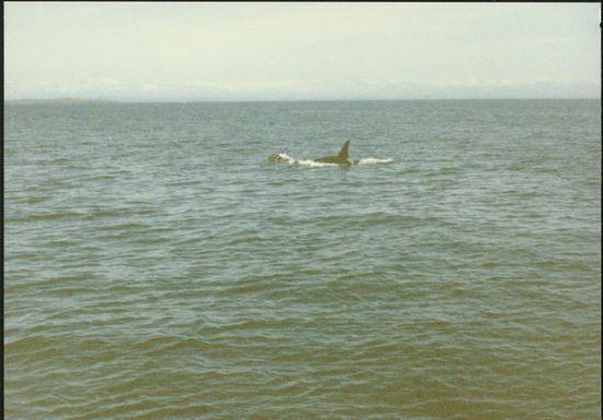 ORCA!!!!