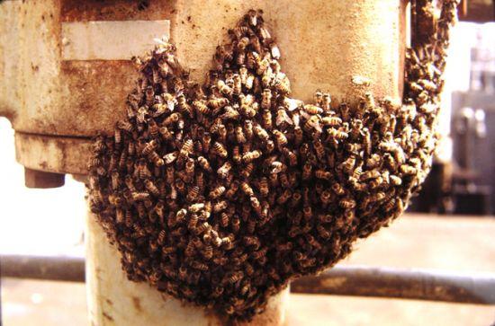 Bees in Brazil