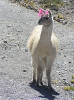 This was not the Llama - but I needed a photo...